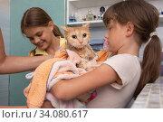 Мама и дети вытирают полотенцем мокрую домашнюю кошку. Стоковое фото, фотограф Иванов Алексей / Фотобанк Лори