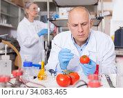 Купить «Scientist checking agricultural products», фото № 34083465, снято 24 января 2019 г. (c) Яков Филимонов / Фотобанк Лори