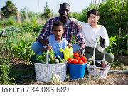 Portrait of family with harvest of vegetables on plantation. Стоковое фото, фотограф Яков Филимонов / Фотобанк Лори