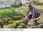 Male gardener working at homestead. Стоковое фото, фотограф Яков Филимонов / Фотобанк Лори