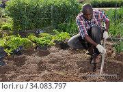 Gardener tilling soil at homestead. Стоковое фото, фотограф Яков Филимонов / Фотобанк Лори