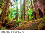 Rain forest with dense vegetation. Стоковое фото, фотограф Zoonar.com/Galyna Andrushko / easy Fotostock / Фотобанк Лори