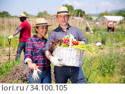 Купить «Happy family of gardeners posing with harvest of vegetables», фото № 34100105, снято 7 июля 2020 г. (c) Яков Филимонов / Фотобанк Лори