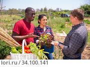 Купить «Communication of happy farmers after harvesting vegetables», фото № 34100141, снято 5 августа 2020 г. (c) Яков Филимонов / Фотобанк Лори