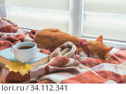 Cup of coffee, book with autumn yellow leaf and red-white cat surrounded wool blanket on windowsill. Стоковое фото, фотограф Zoonar.com/Viktoria Kondysenko / easy Fotostock / Фотобанк Лори
