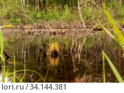 Wild landscape at a bog park in Bavaria. Стоковое фото, фотограф Zoonar.com/SANDRA DOMBROVSKY / easy Fotostock / Фотобанк Лори