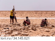 Camel caravan waiting for Afar man cutting and mining salt bricks (slabs) in primitive tools at salt desert in the Danakil depression. Стоковое фото, фотограф Zoonar.com/ARTUSH / easy Fotostock / Фотобанк Лори