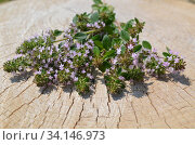 Fresh thyme herb on a stump. Bouquet of thyme. Стоковое фото, фотограф Ольга Козырина / Фотобанк Лори