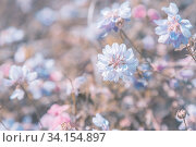 Купить «Meadow flowers in the original artwork, blooming white clover in the meadow with dew drops on a natural floral summer original background in pastel colors», фото № 34154897, снято 4 июля 2020 г. (c) Светлана Евграфова / Фотобанк Лори