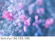 Summer natural floral background, greeting card, poster in pink and blue bedding with a copy space with a beautiful delicate flower in artwork. Стоковое фото, фотограф Светлана Евграфова / Фотобанк Лори
