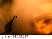 Купить «Муха сидит на листке освещённая контровым солнцем», фото № 34155397, снято 18 июня 2020 г. (c) Игорь Низов / Фотобанк Лори