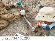Купить «Paleontologists have discovered a fossil in the desert», фото № 34156293, снято 13 июня 2020 г. (c) Евгений Харитонов / Фотобанк Лори