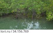 Мангровые деревья в Таиланде. Окрестности города Хуа Хин, Таиланд (2018 год). Стоковое видео, видеограф Виктор Карасев / Фотобанк Лори