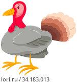 Cartoon Illustration of Funny Turkey Farm Animal Character. Стоковое фото, фотограф Zoonar.com/Igor Zakowski / easy Fotostock / Фотобанк Лори