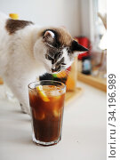 Cute cat and espresso tonic with lemon slice in bid glass with ice. Стоковое фото, фотограф Кристина Сорокина / Фотобанк Лори