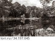Купить «Forest landscape of a lake. Forest around the lake on a summer, sunny day», фото № 34197045, снято 13 июня 2020 г. (c) Григорий Стоякин / Фотобанк Лори