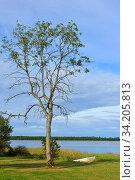 Summer landscape with tree and boat on seashore. Aland Islands, Finland (2014 год). Стоковое фото, фотограф Валерия Попова / Фотобанк Лори