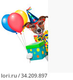 Купить «Birthday dog with balloons behind a white placard», фото № 34209897, снято 15 июля 2020 г. (c) age Fotostock / Фотобанк Лори