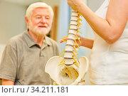 Physiotherapeut erklärt Senior die Wirbelsäule an einem Modell in einer Rückenschule. Стоковое фото, фотограф Zoonar.com/Robert Kneschke / age Fotostock / Фотобанк Лори
