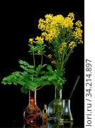 Купить «Fresh plant branches in medical flasks on black background», фото № 34214897, снято 15 июля 2020 г. (c) easy Fotostock / Фотобанк Лори