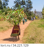 Rural black african woman carries a bundle of harvested sugar cane on her head returning home from a field labor work. Стоковое фото, фотограф Zoonar.com/Matej Kastelic / easy Fotostock / Фотобанк Лори