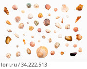 Collage from natural dried sea shells on white paper. Стоковое фото, фотограф Zoonar.com/Valery Voennyy / easy Fotostock / Фотобанк Лори