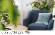 Купить «flower and chair with cushion at cozy home», видеоролик № 34229709, снято 14 июня 2020 г. (c) Syda Productions / Фотобанк Лори