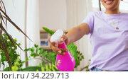 Купить «hand spraying houseplant with water at home», видеоролик № 34229713, снято 14 июня 2020 г. (c) Syda Productions / Фотобанк Лори