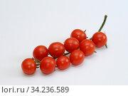 Tomaten, tomate, gemüse, frucht, früchte, rot, garten, essen, lebensmittel, nahrung, ernährung, küche, vegetarisch. Стоковое фото, фотограф Zoonar.com/Volker Rauch / easy Fotostock / Фотобанк Лори