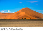 Namib desert, Sossusvlei region, Namibia, March. Стоковое фото, фотограф Ernie Janes / Nature Picture Library / Фотобанк Лори