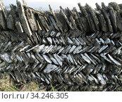 Cornish herring-bone dry stone wall, Tintagel, Cornwall, England,... Стоковое фото, фотограф Nigel Cattlin / Nature Picture Library / Фотобанк Лори