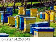 Blue and yellow beehives in garden. Стоковое фото, фотограф Zoonar.com/Magdalena Ruseva / age Fotostock / Фотобанк Лори