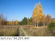 Осенний пейзаж в сельской местности. Стоковое фото, фотограф Елена Коромыслова / Фотобанк Лори