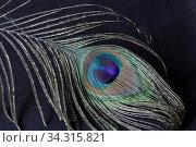 Close-up bird feather peacock. Стоковое фото, фотограф Яна Королёва / Фотобанк Лори