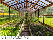 Cucumbers and tomatoes grow in the greenhouse. Double-skinned greenhouse made of polycarbonate. Стоковое фото, фотограф Евгений Ткачёв / Фотобанк Лори