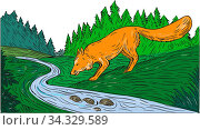 Drawing sketch style illustration of a fox drinking from river creek with woods trees forest in the background. Стоковое фото, фотограф Zoonar.com/patrimonio designs limited / easy Fotostock / Фотобанк Лори