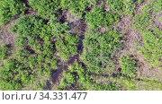 Купить «Aerial video of forest boggy lake in the Karakansky pine forest near the shore of the Ob reservoir.», видеоролик № 34331477, снято 26 июля 2020 г. (c) Serg Zastavkin / Фотобанк Лори