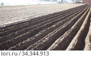 Plowed field prepared for planting. Стоковое видео, видеограф Яков Филимонов / Фотобанк Лори