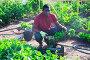 Купить «Farmer harvests bell pepper and puts in boxes», фото № 34345277, снято 1 июля 2020 г. (c) Яков Филимонов / Фотобанк Лори