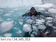 Photographer Franco Banfi in water before diving under sea ice. Tasiilaq, East Greenland. April 2018. Редакционное фото, фотограф Franco  Banfi / Nature Picture Library / Фотобанк Лори