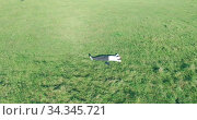 Купить «Low orbital flight around man on green grass with notebook pad at yellow rural field.», видеоролик № 34345721, снято 21 марта 2019 г. (c) Александр Маркин / Фотобанк Лори