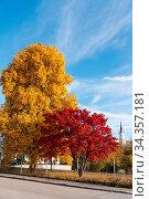 Купить «Leuchtende Ahornbäume mit verschiedenen Farben und schönem Panorama», фото № 34357181, снято 7 августа 2020 г. (c) easy Fotostock / Фотобанк Лори