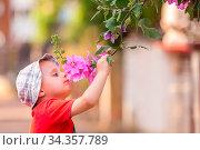 Cute little Caucasian boy with a hat smelling blossoming flowers in... Стоковое фото, фотограф Zoonar.com/Pawel Opaska / easy Fotostock / Фотобанк Лори