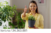 happy asian woman with flower in pot at home. Стоковое видео, видеограф Syda Productions / Фотобанк Лори