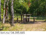 Place of rest of people tourists in the forest, halt, table and bench in the summer sunny green birch forest among the trees in a clearing in the park. Стоковое фото, фотограф Светлана Евграфова / Фотобанк Лори