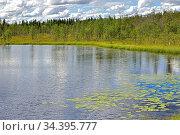 Summer landscapes. Northern lake with swampy shores. Finnish Lapland. Стоковое фото, фотограф Валерия Попова / Фотобанк Лори