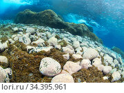 Seafloor, with rocks covered in algae, El Hierro, Canary Islands. Стоковое фото, фотограф Sergio Hanquet / Nature Picture Library / Фотобанк Лори
