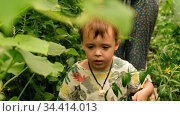 Boy among plants in garden. Стоковое видео, видеограф Ekaterina Demidova / Фотобанк Лори