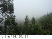 Nebel in den Bergen, Madeira. Стоковое фото, фотограф Zoonar.com/Gabriele Sitnik-Schmach / easy Fotostock / Фотобанк Лори
