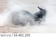 Adult donkey rolling in the sand - For fun of against itching. Стоковое фото, фотограф Zoonar.com/Micha Klootwijk / age Fotostock / Фотобанк Лори